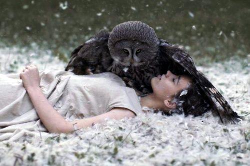 Сова как птица-тотем