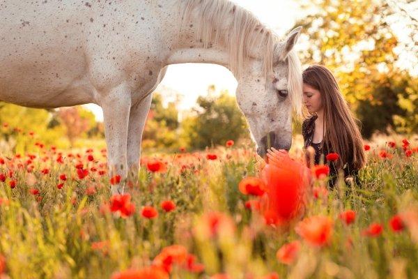 Женский тотем Лошадь